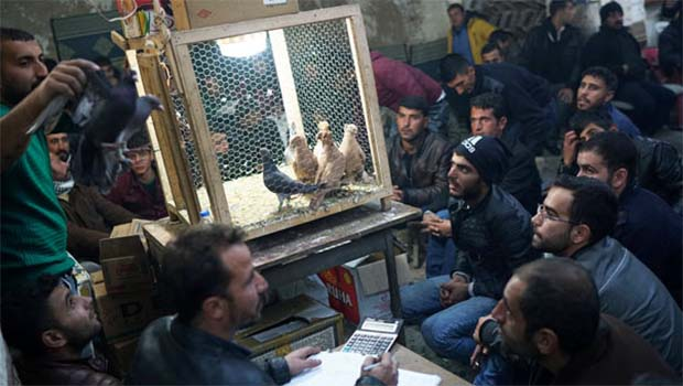 Urfa'nın güvercinleri dünyada ünlü oldu
