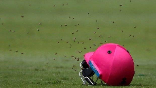 'Sahayı arılar bastı'