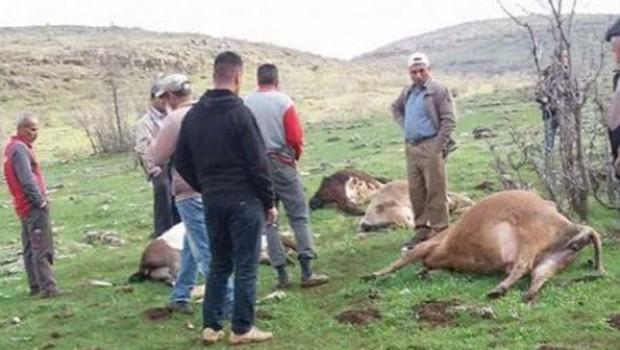 Mardin'de büyükbaş hayvan sürüsüne yıldırım düştü