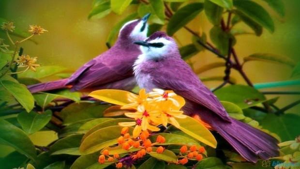 Kuşların yeni keşfedilen özelliği