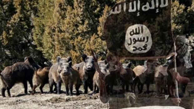 Yaban domuzları IŞİD'e saldırdı: 3 ölü