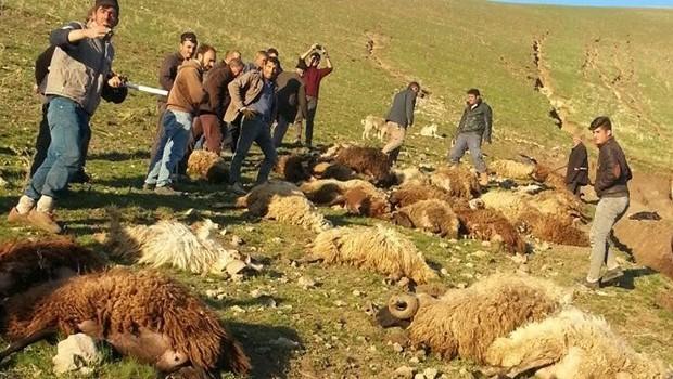 Ağrı'da sele kapılan 70 koyun telef oldu