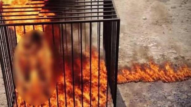Bağdadi'nin öldüğünü ima eden İmam'a infaz!