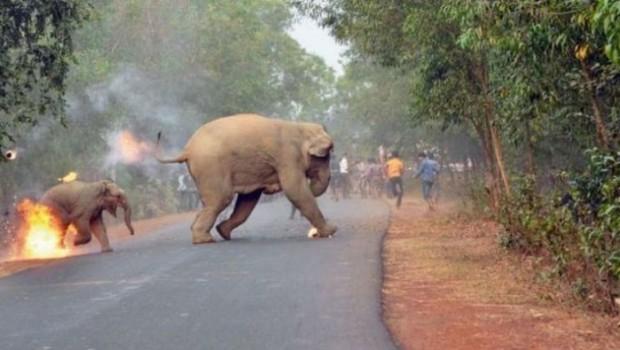 Yavru filin ateşe verildiği anın fotoğrafı 'vahşi yaşam' ödülü aldı