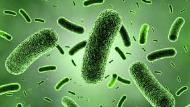 Bilim insanları bakteriden kayıt cihazı yaptı!