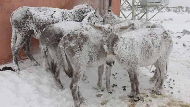 Şanlıurfa'da eşekler buz tuttu!