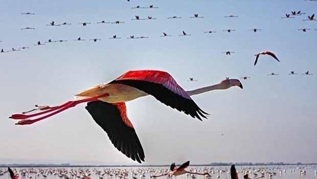 Mehabad'da toplu flamingo ölümü vakası