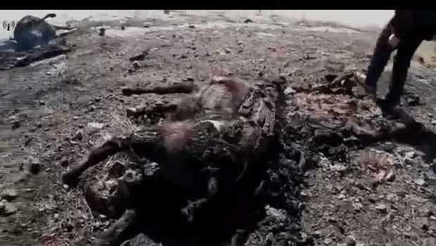 Roboski Katliamı Ölüm Kervanı Belgeseli