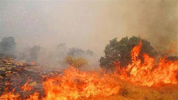 İran Doğu Kürdistan ormanlarını yakıyor