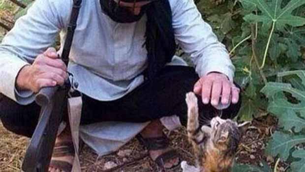 IŞİD'in canlı bombası kediler