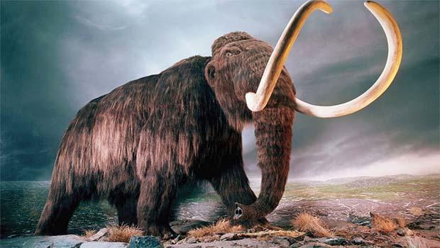 Kuzey Kürdistan'da Mamut fosili bulundu