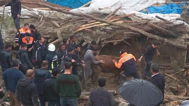 Van'da enkaz altında kalan 54 hayvan telef oldu
