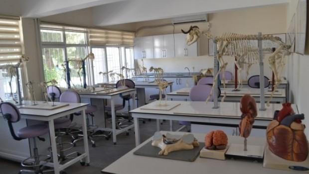 Siirt'te hayvan hastanesi kuruldu