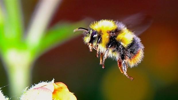 Bilim insanlarından kıyamet uyarısı: Kanatlı böcekler...