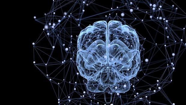 Bilimciler maymun beynine bilgi yerleştirmeyi başardı