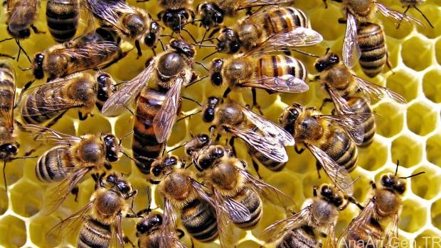 İki çocuk,500 bin arının ölümüne yol açmaktan gözaltına alındı