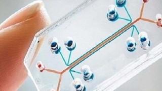 Belçika'da kanseri 15 dakikada teşhis edebilen çip geliştirildi