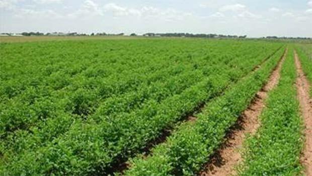 İsrail Türkiye'ye Tarım ürünleri ithalatını dondurdu