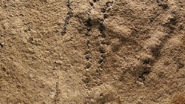 Dünyadaki en eski ayak izi: 551 milyon yaşında!