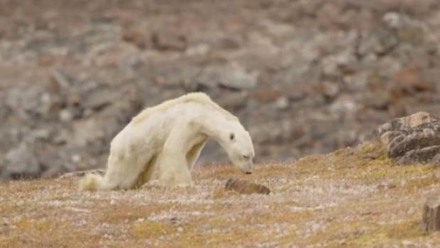 2.5 milyar kez izlenmişti... Dünyaca ünlü dergiden 'kutup ayısı' itirafı!