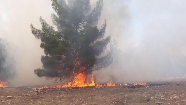 Göbeklitepe'de korkutan yangın