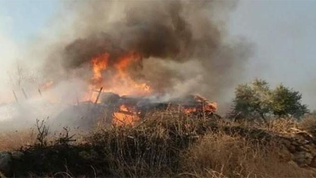 Efrin'de bir orman yangını daha