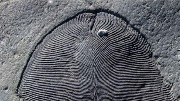 558 milyon yıllık sır çözüldü: Bilinen ilk hayvan