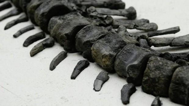Arjantin'de bulundu... Bilinmeyen bir dinozor türü!