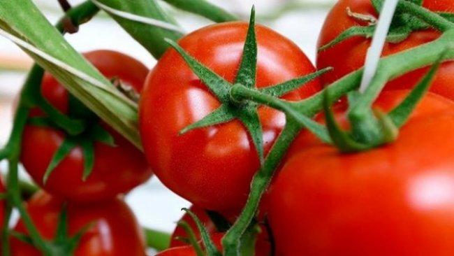 Rusya, Türkiye'den ithal ettiği domates kotasını iki katına çıkartacak