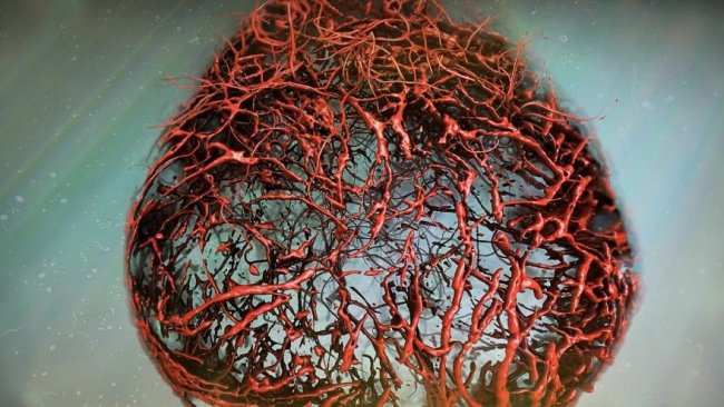 Bilim insanları laboratuvar ortamında insan damarı geliştirdi