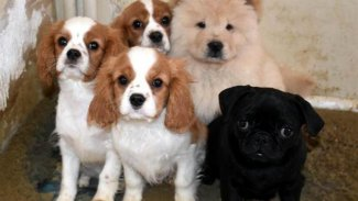 Fransa'da bir belediye başkanı köpeklerin havlamasını yasakladı