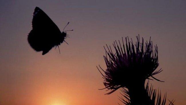 Dünya böcek popülasyonu tehdit altında