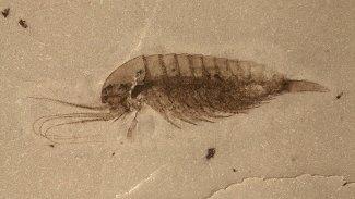 518 milyon yıllık binlerce fosil bulundu