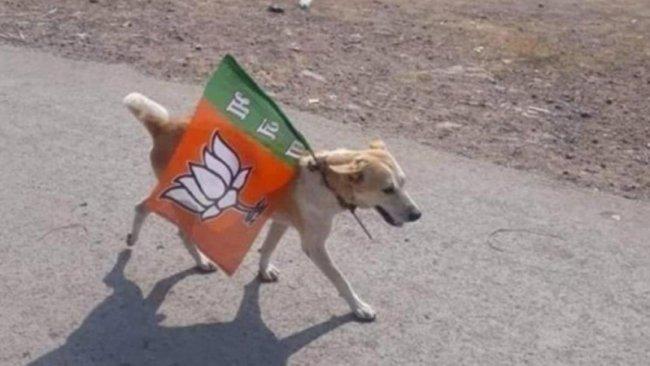 Bir köpek, seçim propagandası yapmaktan gözaltına alındı
