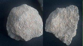 Gabar Dağı'nda 45 milyon yıllık fosil bulundu