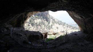 Şaneder Mağarası tarihe ışık tutuyor