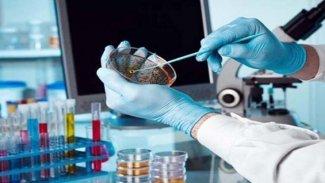 Bilim insanları, kanserin yayılmasını durdurmanın yolunu buldu