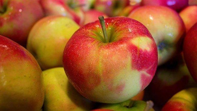 ABD'de satışa sunuldu... Bu Elmalar 1 yıl bozulmuyor