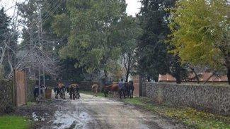 Antep'te bir mahalle 6 ay süreyle karantinaya alındı
