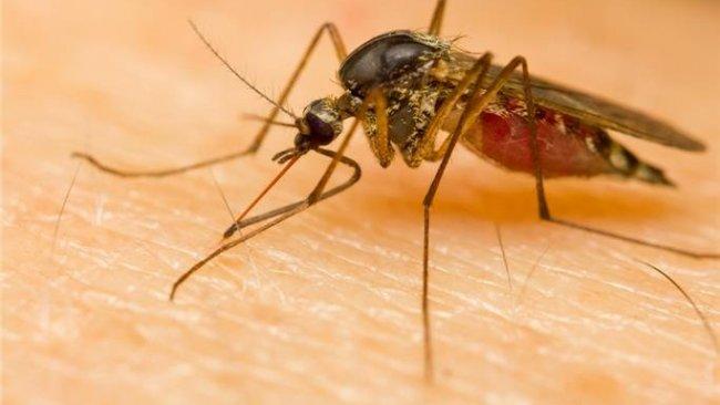 Dünya Sağlık Örgütü, 'Koronavirüs sivrisineklerle bulaşır mı?' sorusuna yanıt verdi