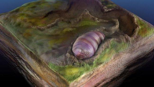 Heyecanlandıran keşif: 555 milyon yıllık fosil insan ve hayvanların atası mı?