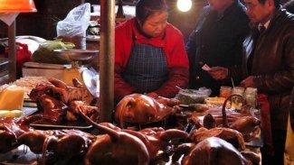 BM: Vahşi hayvan pazarları yasaklansın