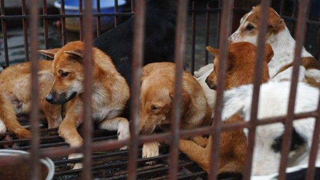 Çin'de kedi ve köpekler için yeni adım