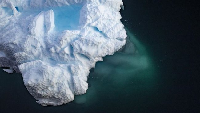 Antarktika buzulunun altında 90 milyon yıllık yağmur ormanı keşfedildi