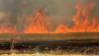 IŞİD, onlarca dönüm tarım arazisini kullanılamaz hale getirdi