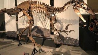 70 milyon yaşında 10 metrelik dinozor fosili bulundu