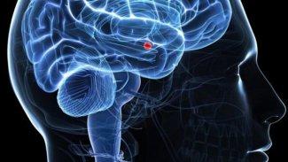 Bilim insanları beyinde acı duymayı tamamen engelleyecek noktayı keşfetti