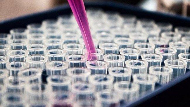 Oxford Üniversitesi: Koronavirus aşı çalışmasında ikinci faza geçtik