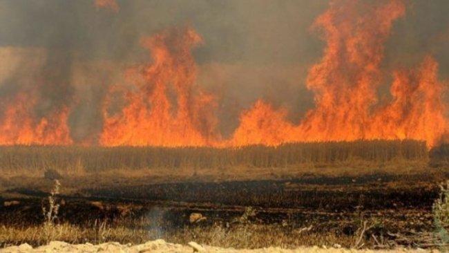 Kerkük'te Kürt çiftçilerin tarlaları ateşe veriliyor