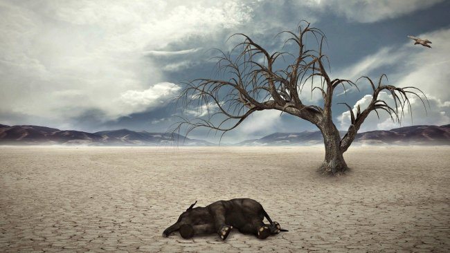 6. kitlesel yok oluşun içindeyiz ve süreç hızlanıyor